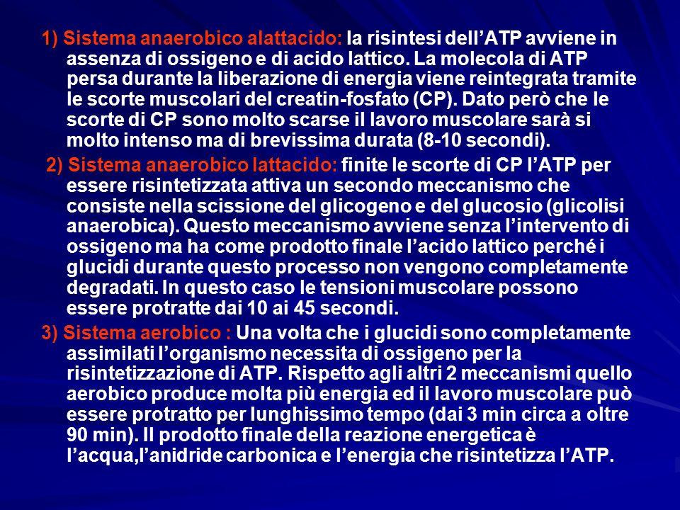 1) Sistema anaerobico alattacido: la risintesi dell'ATP avviene in assenza di ossigeno e di acido lattico. La molecola di ATP persa durante la liberazione di energia viene reintegrata tramite le scorte muscolari del creatin-fosfato (CP). Dato però che le scorte di CP sono molto scarse il lavoro muscolare sarà si molto intenso ma di brevissima durata (8-10 secondi).