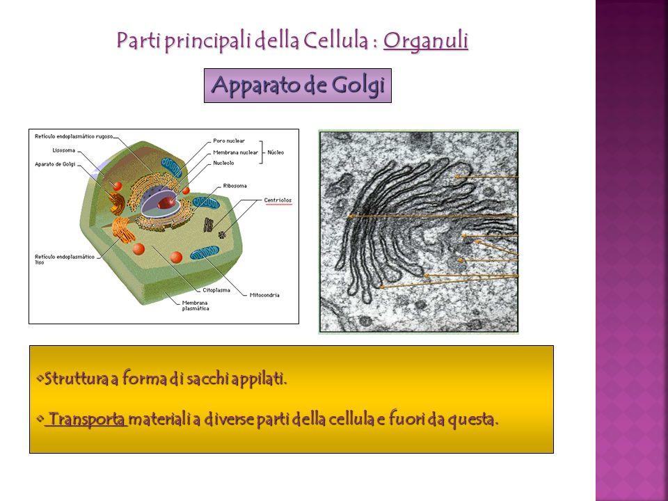 Parti principali della Cellula : Organuli