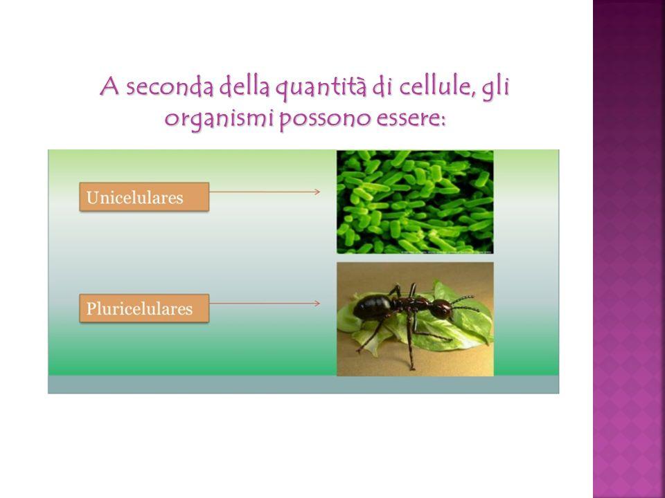 A seconda della quantità di cellule, gli organismi possono essere: