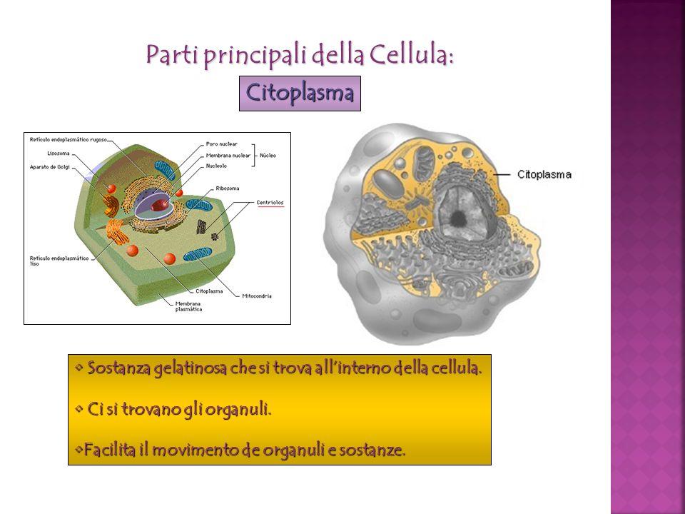 Parti principali della Cellula:
