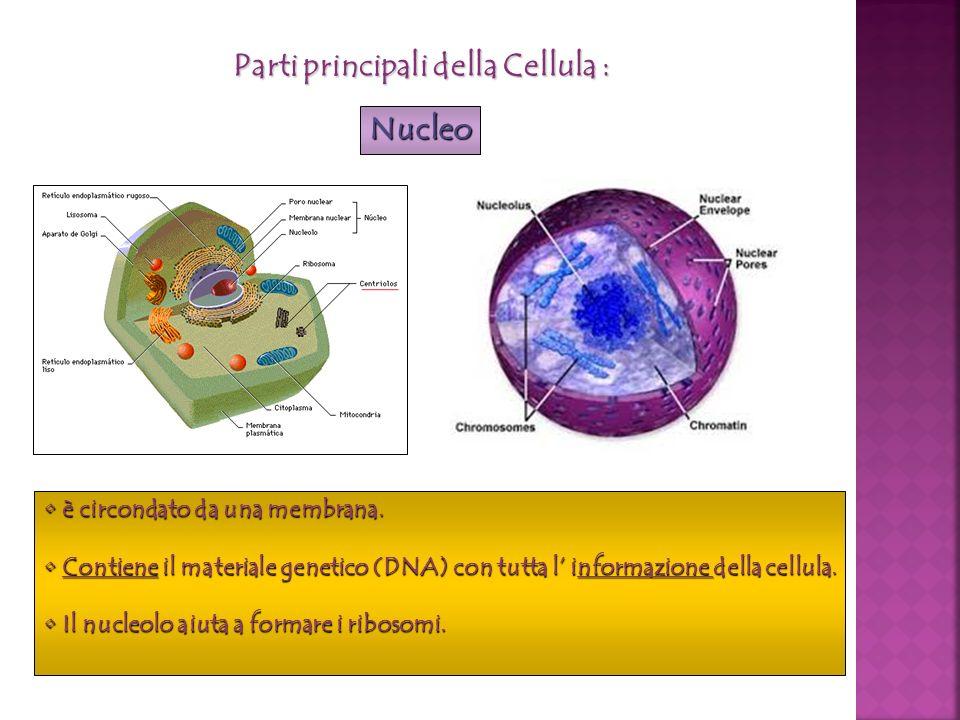 Parti principali della Cellula :