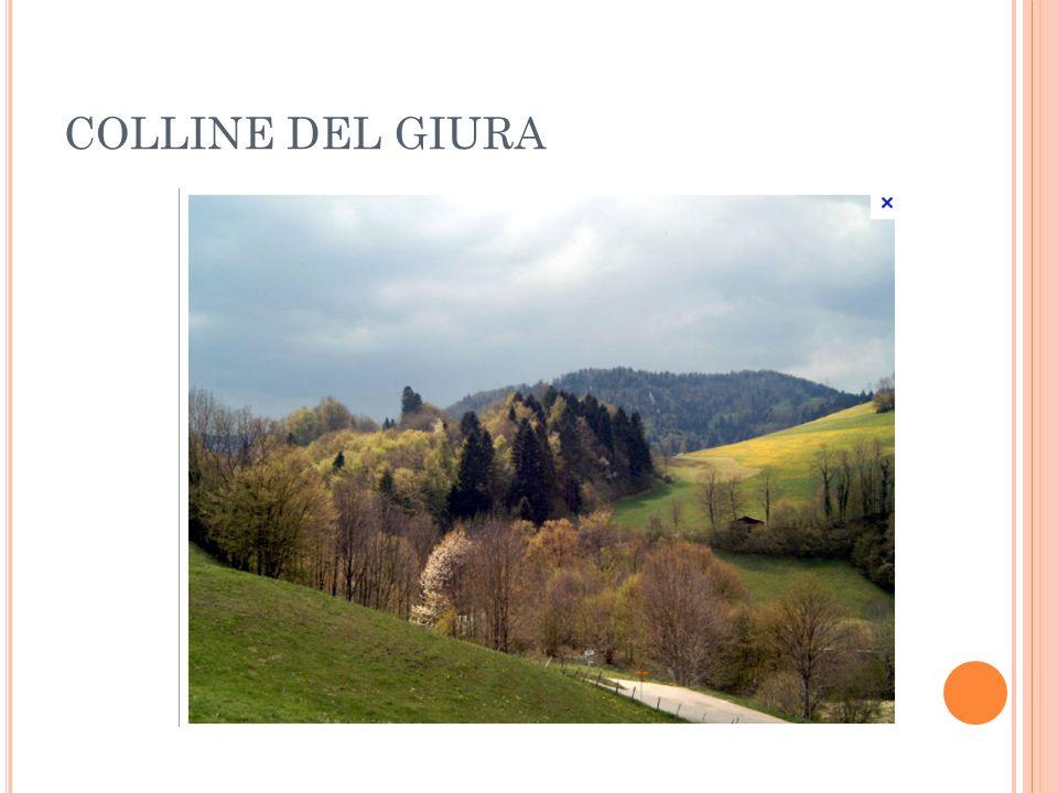 COLLINE DEL GIURA