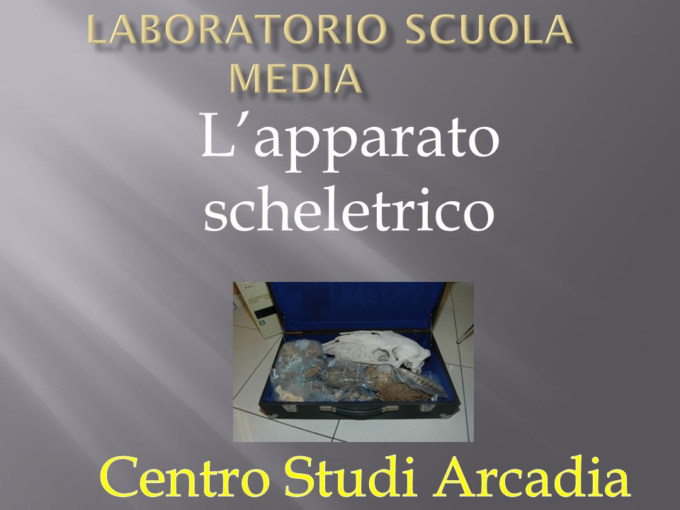 Laboratorio Scuola Media