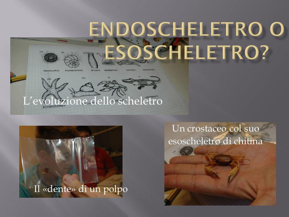 Endoscheletro o esoscheletro
