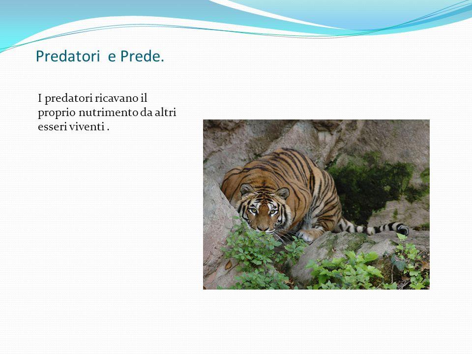 Predatori e Prede. I predatori ricavano il proprio nutrimento da altri esseri viventi .