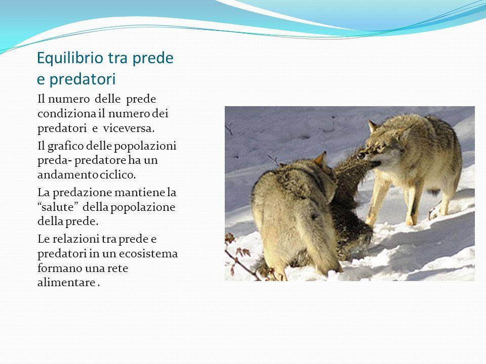 Equilibrio tra prede e predatori