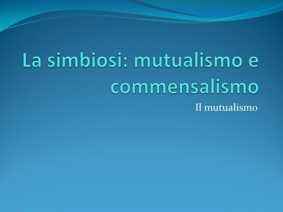 La simbiosi: mutualismo e commensalismo