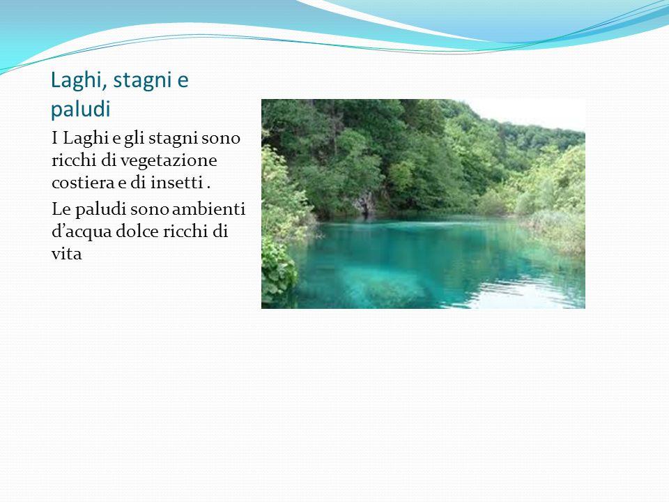 Laghi, stagni e paludi I Laghi e gli stagni sono ricchi di vegetazione costiera e di insetti .