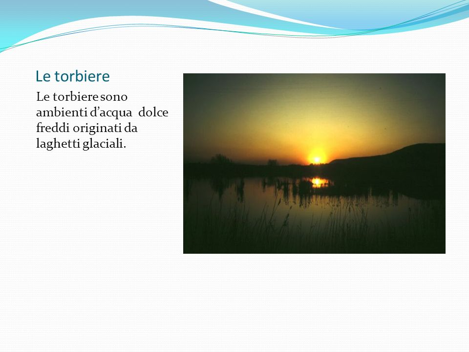 Le torbiere Le torbiere sono ambienti d'acqua dolce freddi originati da laghetti glaciali.