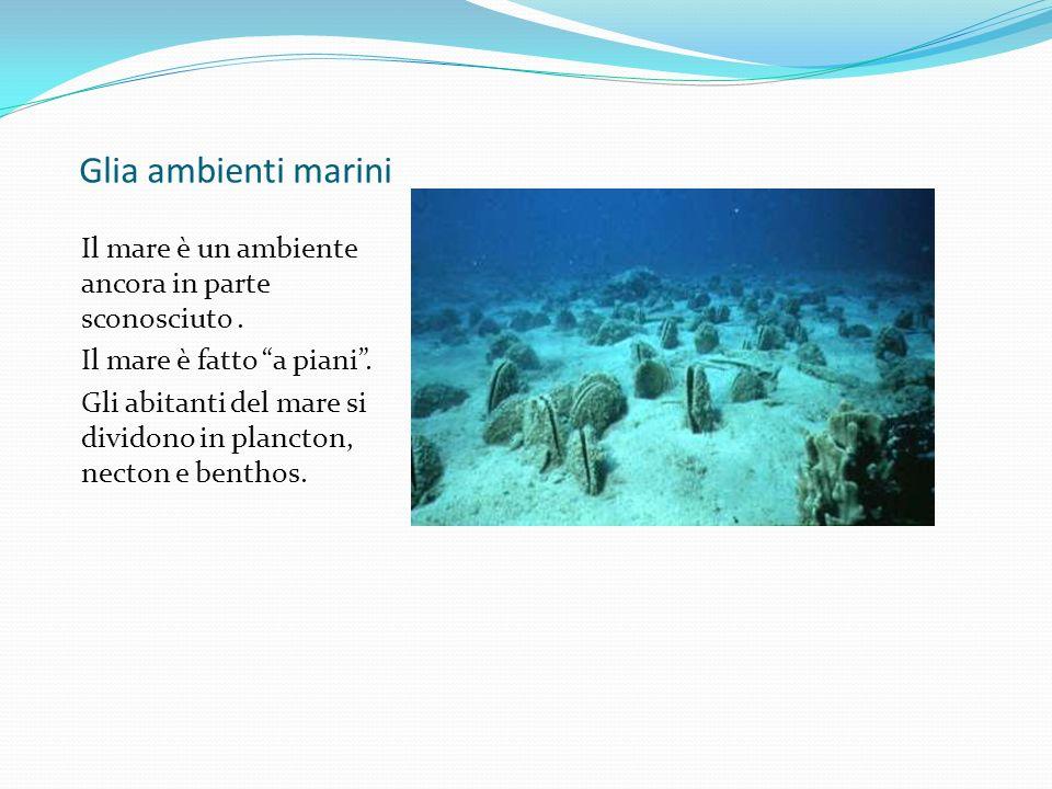 Glia ambienti marini Il mare è un ambiente ancora in parte sconosciuto . Il mare è fatto a piani .