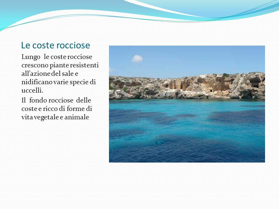 Le coste rocciose Lungo le coste rocciose crescono piante resistenti all'azione del sale e nidificano varie specie di uccelli.