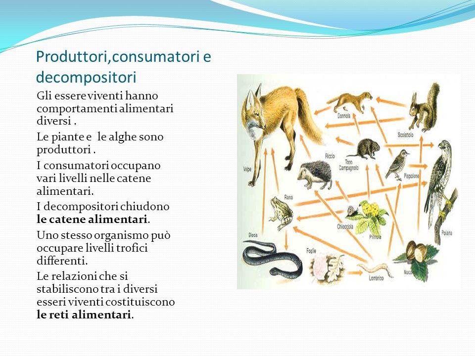 Produttori,consumatori e decompositori