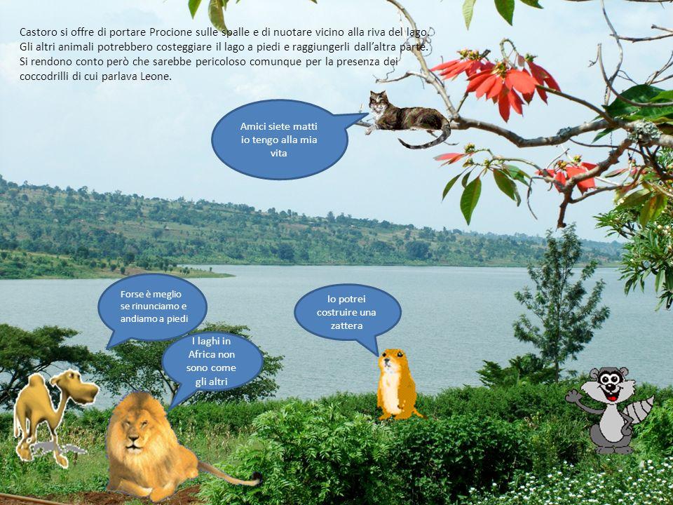 Castoro si offre di portare Procione sulle spalle e di nuotare vicino alla riva del lago. Gli altri animali potrebbero costeggiare il lago a piedi e raggiungerli dall'altra parte. Si rendono conto però che sarebbe pericoloso comunque per la presenza dei coccodrilli di cui parlava Leone.