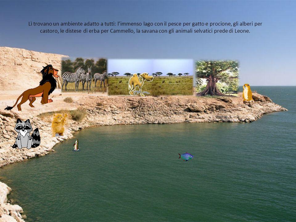 Lì trovano un ambiente adatto a tutti: l'immenso lago con il pesce per gatto e procione, gli alberi per castoro, le distese di erba per Cammello, la savana con gli animali selvatici prede di Leone.