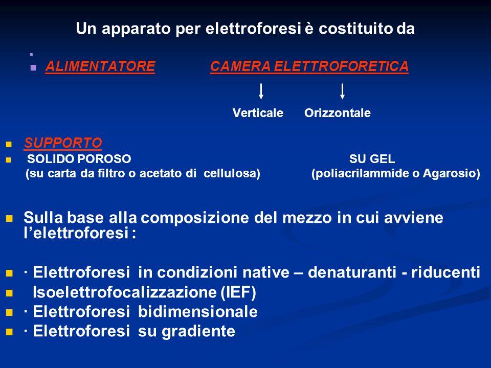 Un apparato per elettroforesi è costituito da