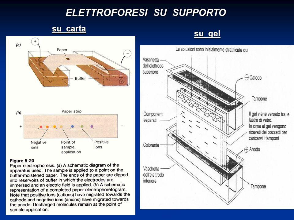 ELETTROFORESI SU SUPPORTO