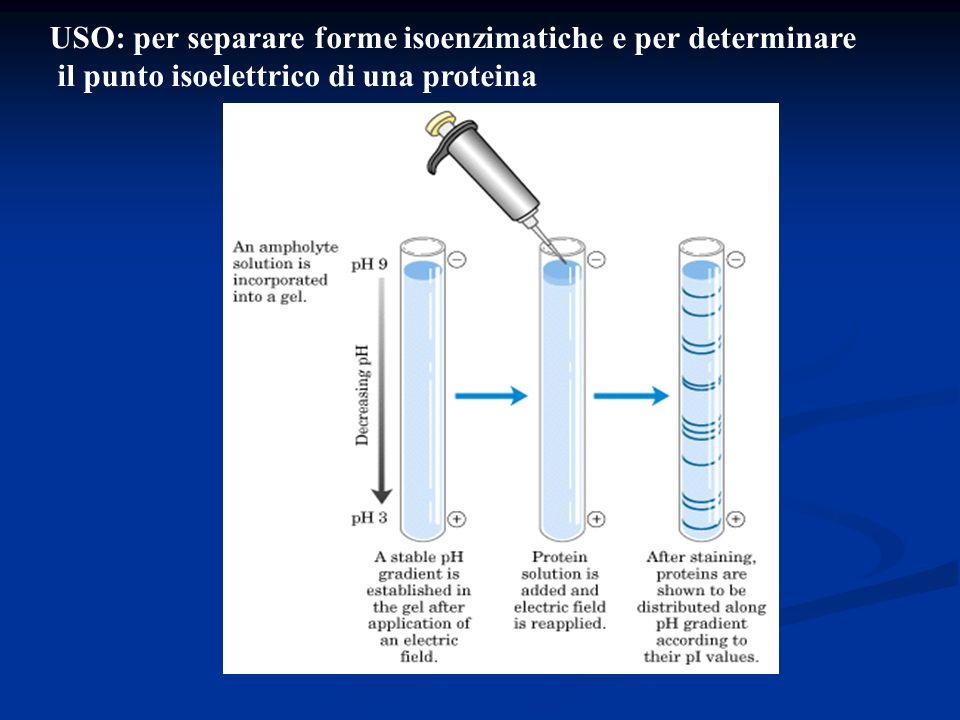 USO: per separare forme isoenzimatiche e per determinare