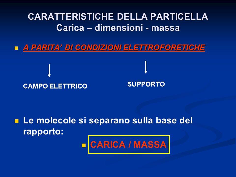 CARATTERISTICHE DELLA PARTICELLA Carica – dimensioni - massa
