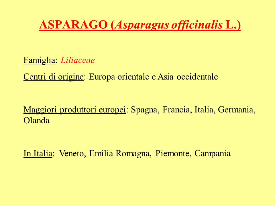 ASPARAGO (Asparagus officinalis L.)