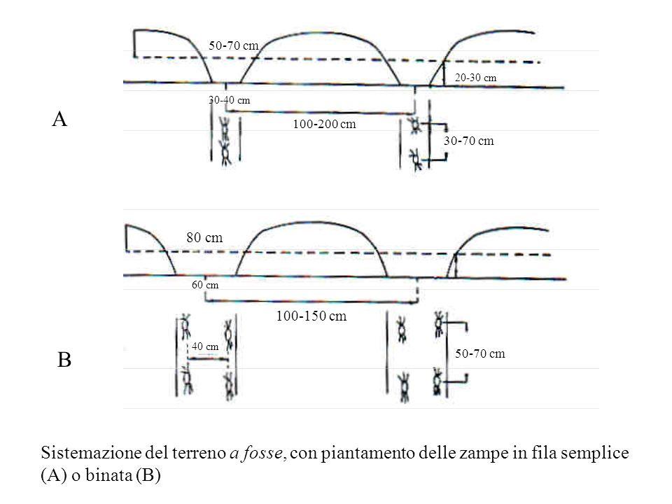 50-70 cm 20-30 cm. 30-40 cm. A. 100-200 cm. 30-70 cm. 80 cm. 60 cm. 100-150 cm. 40 cm. B. 50-70 cm.