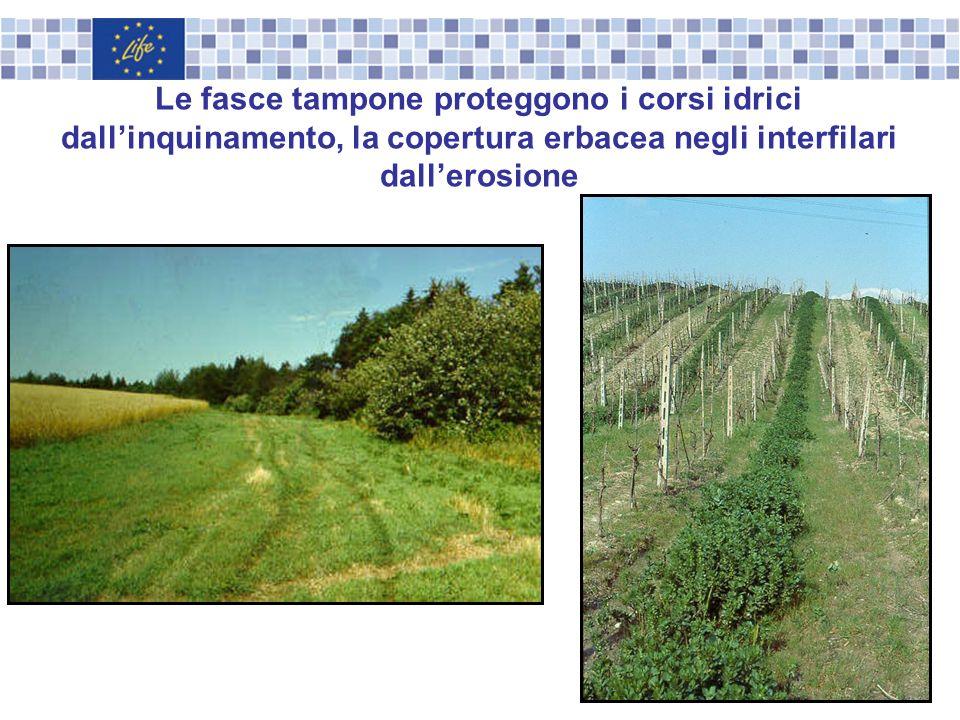 Le fasce tampone proteggono i corsi idrici dall'inquinamento, la copertura erbacea negli interfilari dall'erosione