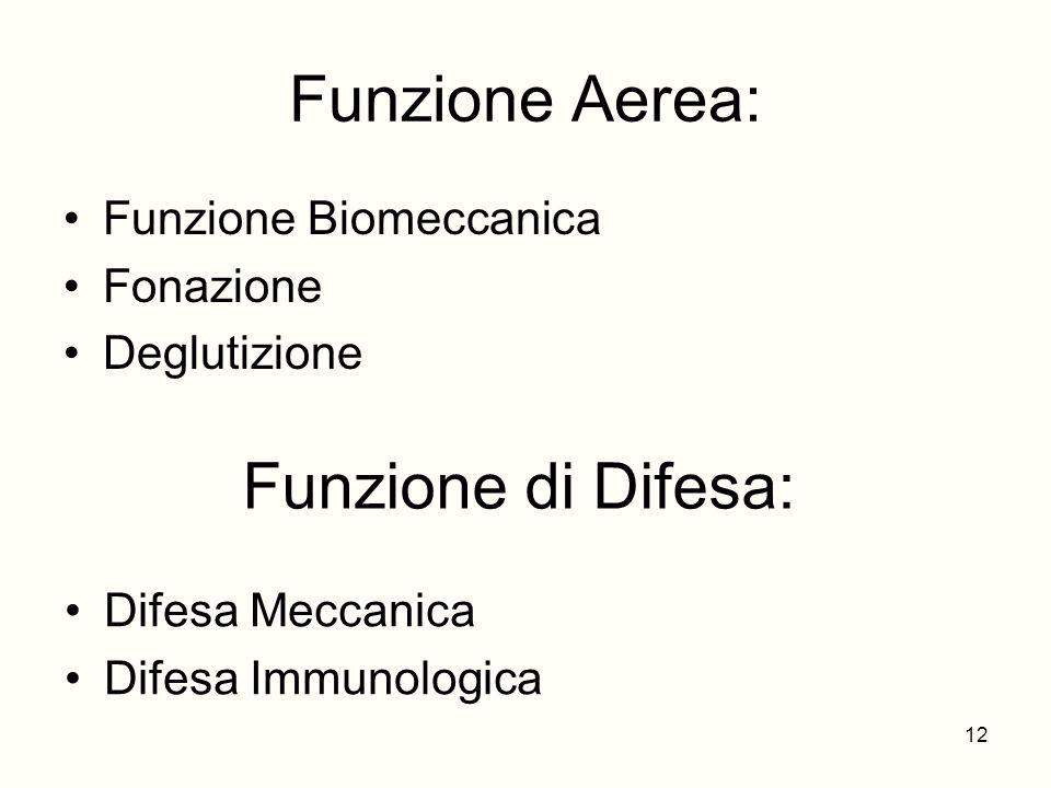 Funzione Aerea: Funzione di Difesa: Funzione Biomeccanica Fonazione