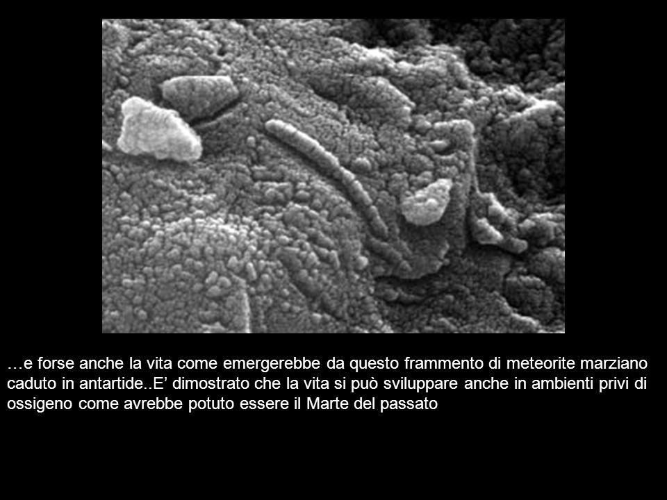…e forse anche la vita come emergerebbe da questo frammento di meteorite marziano caduto in antartide..E' dimostrato che la vita si può sviluppare anche in ambienti privi di ossigeno come avrebbe potuto essere il Marte del passato