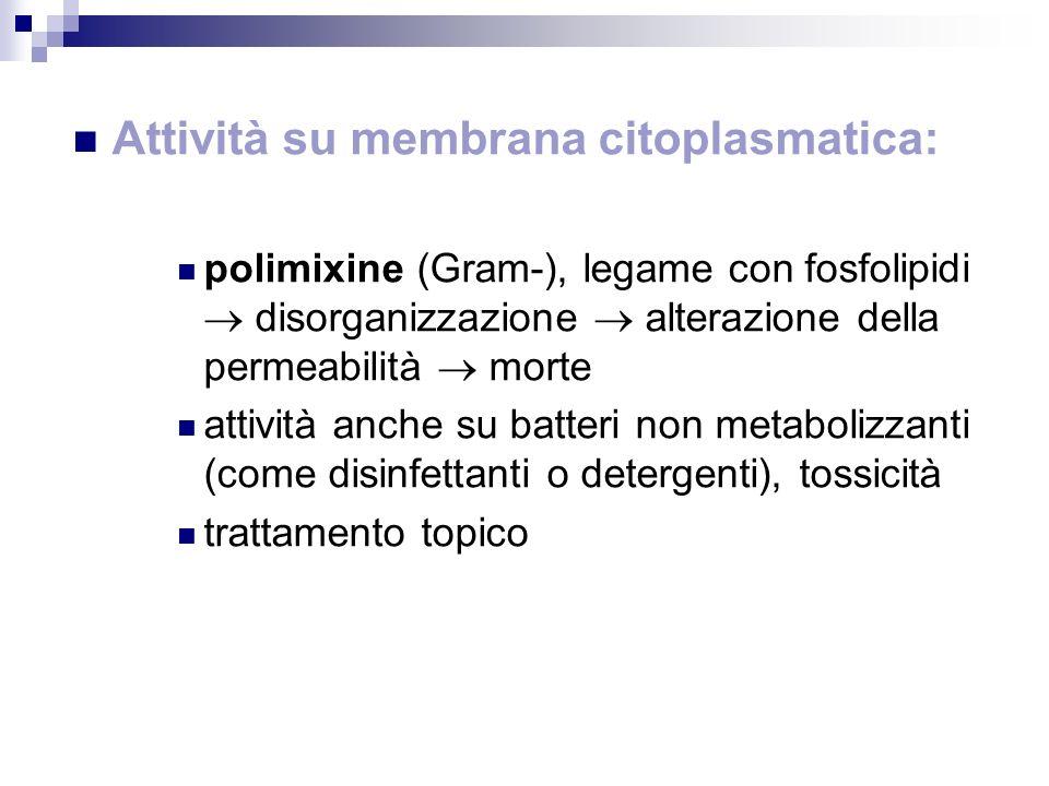 Attività su membrana citoplasmatica:
