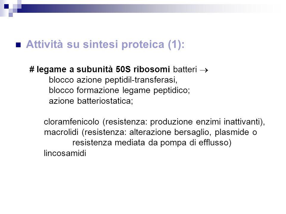 Attività su sintesi proteica (1):