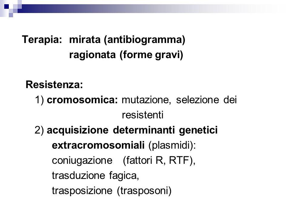 Terapia: mirata (antibiogramma)
