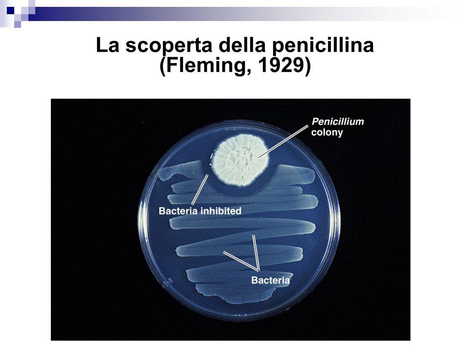 La scoperta della penicillina (Fleming, 1929)