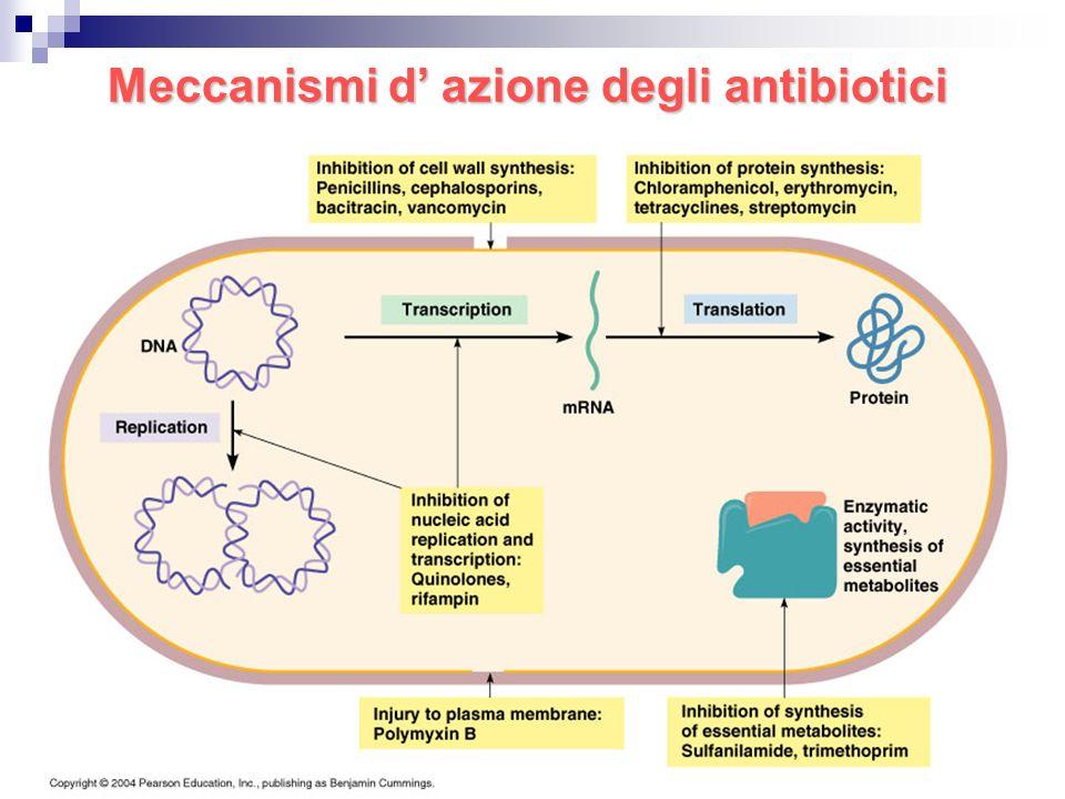 Meccanismi d' azione degli antibiotici