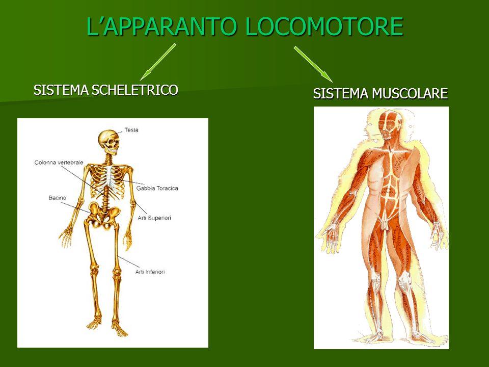 L'APPARANTO LOCOMOTORE