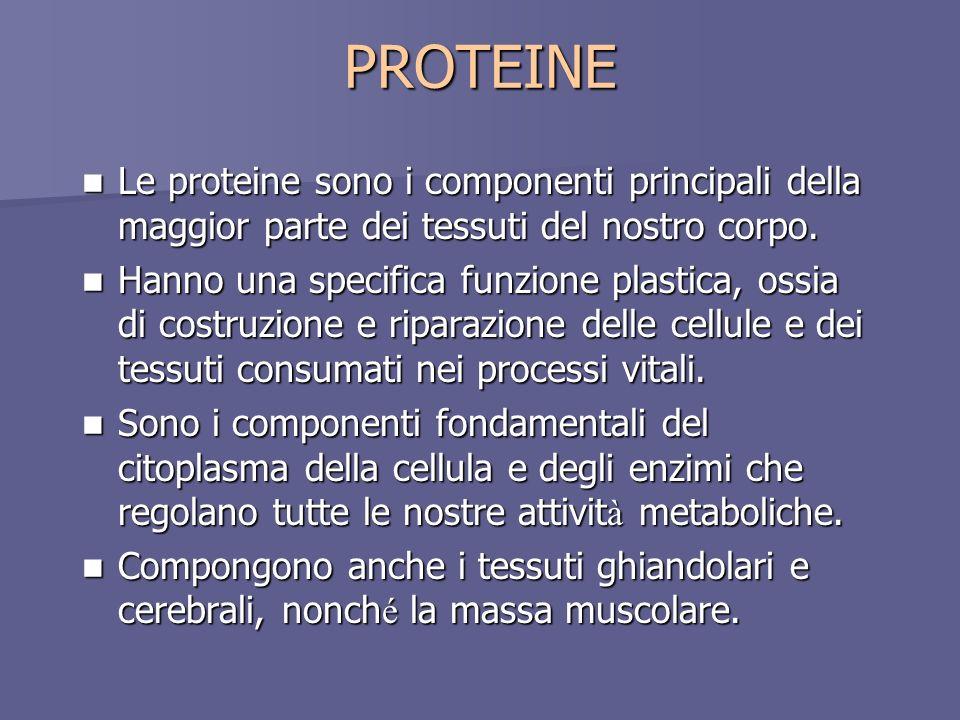 PROTEINE Le proteine sono i componenti principali della maggior parte dei tessuti del nostro corpo.