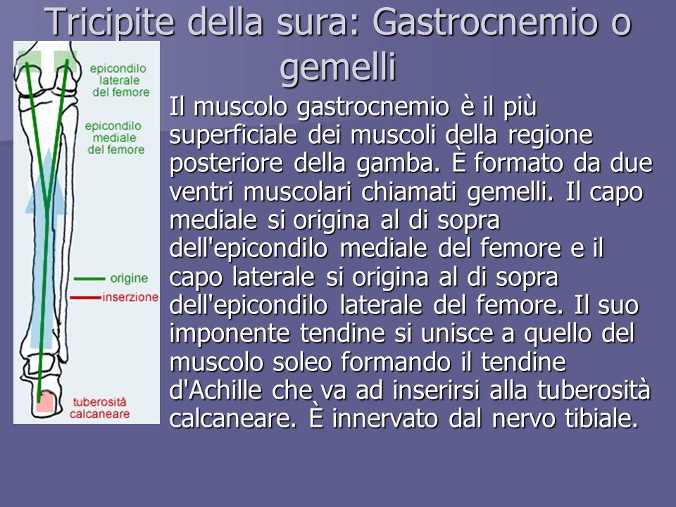 Tricipite della sura: Gastrocnemio o gemelli