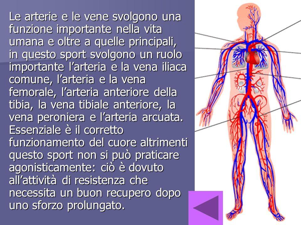 Le arterie e le vene svolgono una funzione importante nella vita umana e oltre a quelle principali, in questo sport svolgono un ruolo importante l'arteria e la vena iliaca comune, l'arteria e la vena femorale, l'arteria anteriore della tibia, la vena tibiale anteriore, la vena peroniera e l'arteria arcuata.