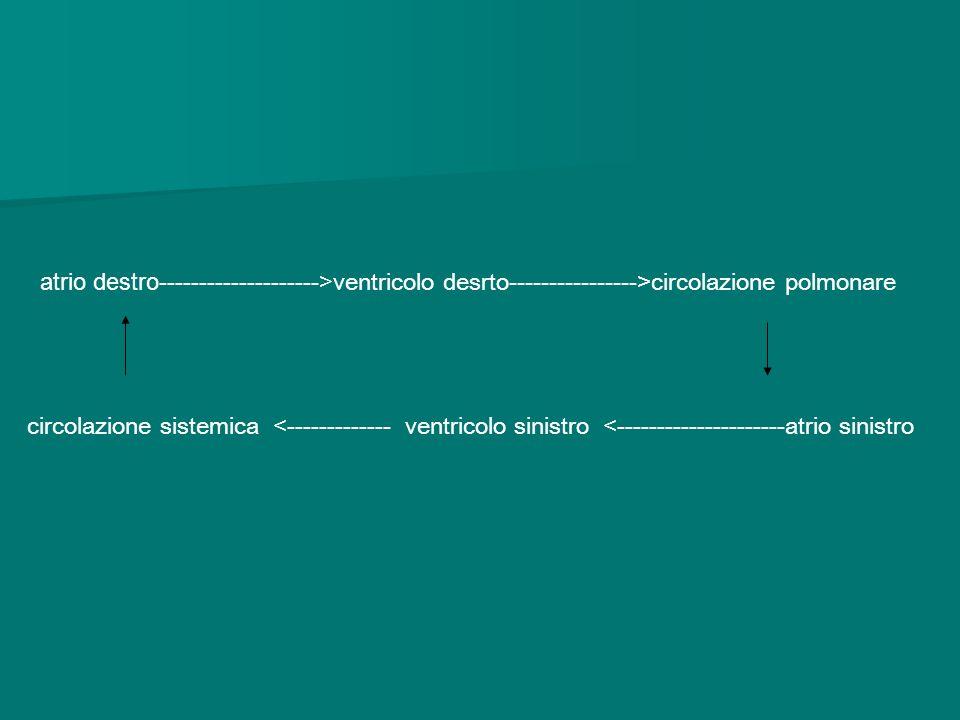 atrio destro-------------------->ventricolo desrto---------------->circolazione polmonare