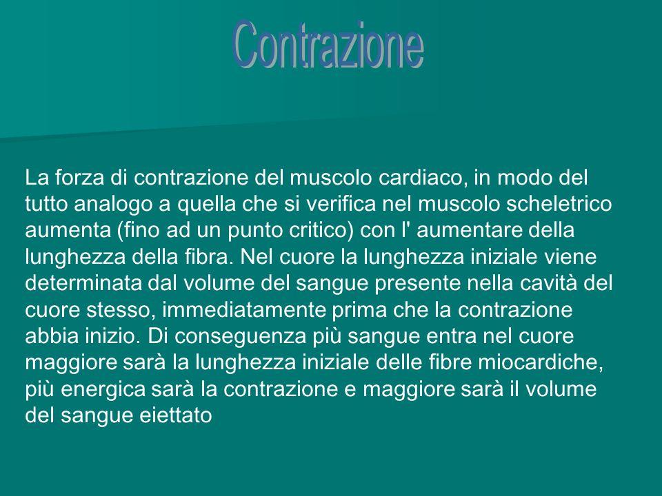 Contrazione