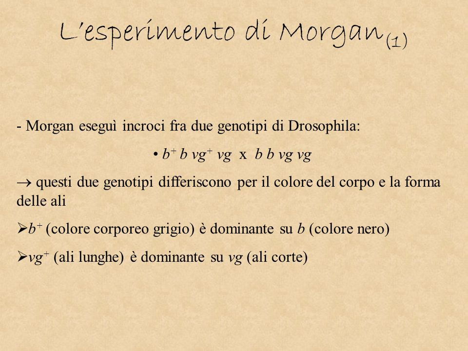 L'esperimento di Morgan(1)