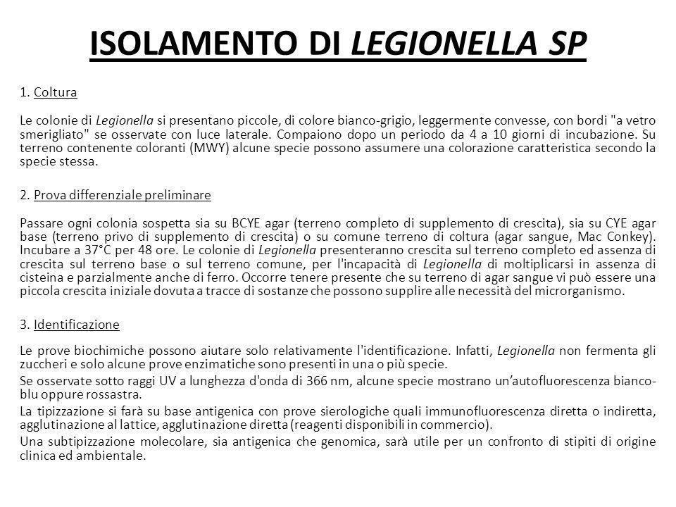ISOLAMENTO DI LEGIONELLA SP