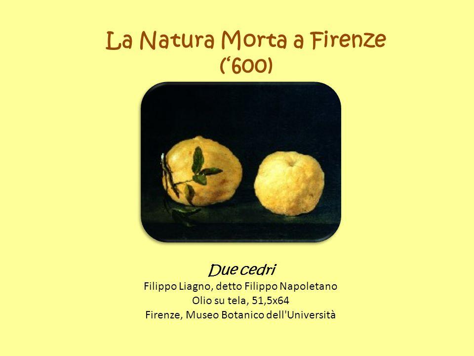 La Natura Morta a Firenze