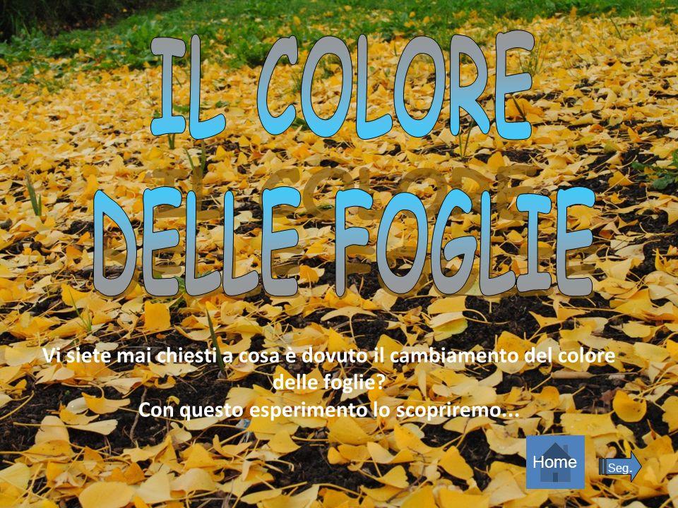 IL COLORE DELLE FOGLIE. Vi siete mai chiesti a cosa è dovuto il cambiamento del colore delle foglie Con questo esperimento lo scopriremo...