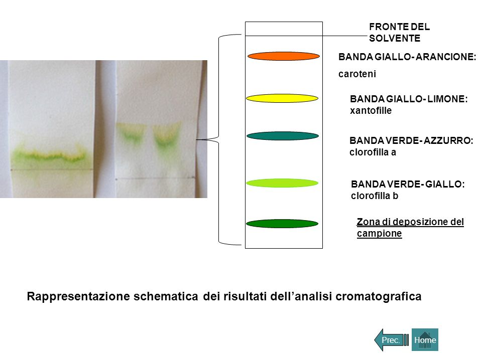 Rappresentazione schematica dei risultati dell'analisi cromatografica