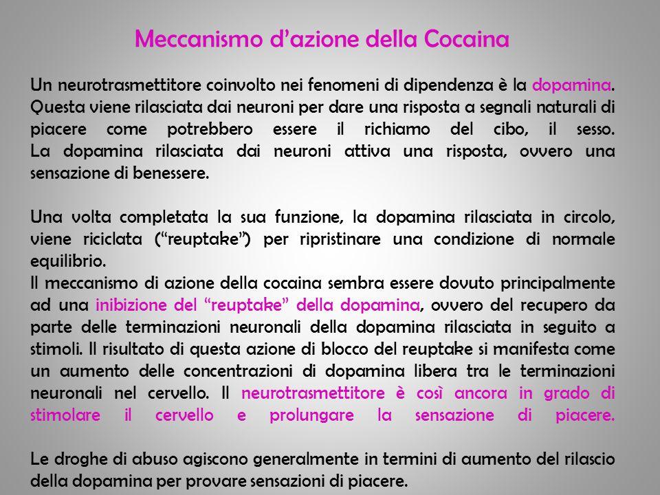 Meccanismo d'azione della Cocaina