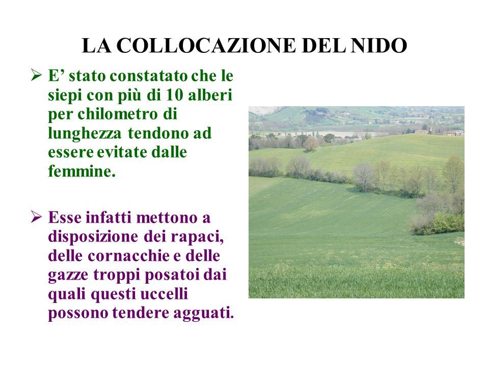 LA COLLOCAZIONE DEL NIDO