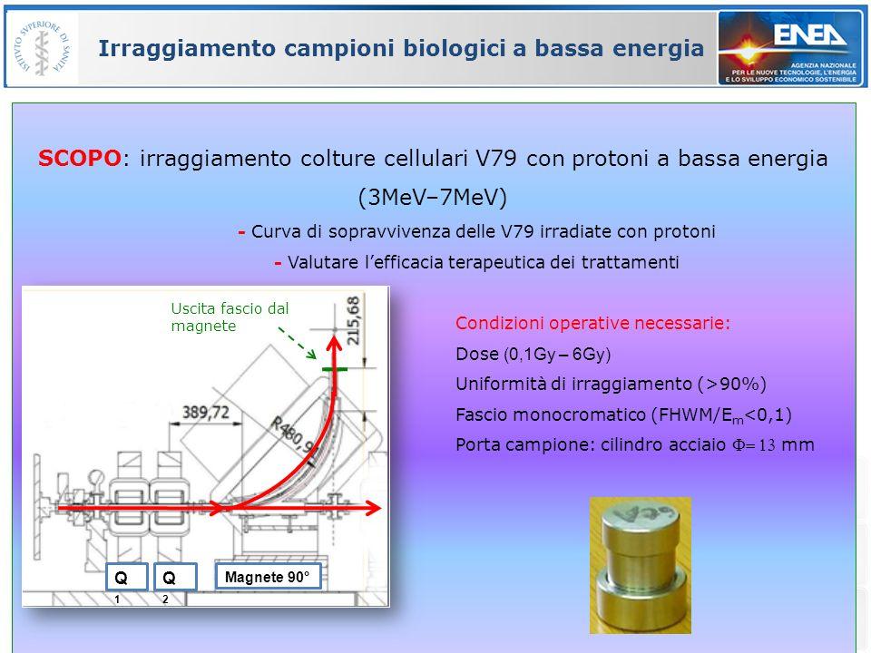 Irraggiamento campioni biologici a bassa energia