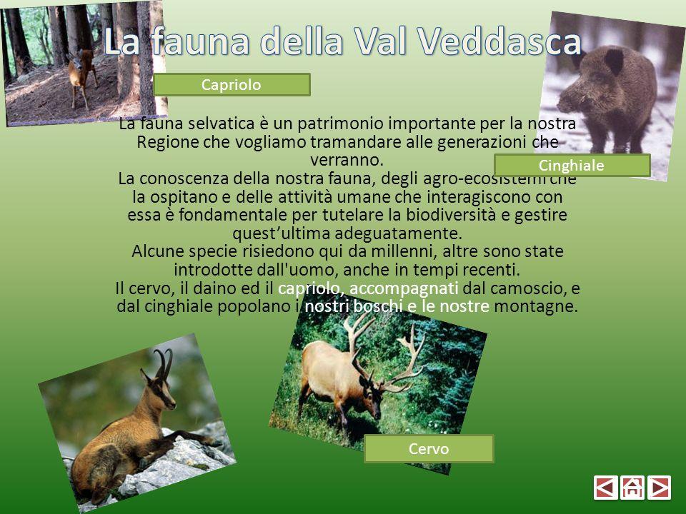 La fauna della Val Veddasca
