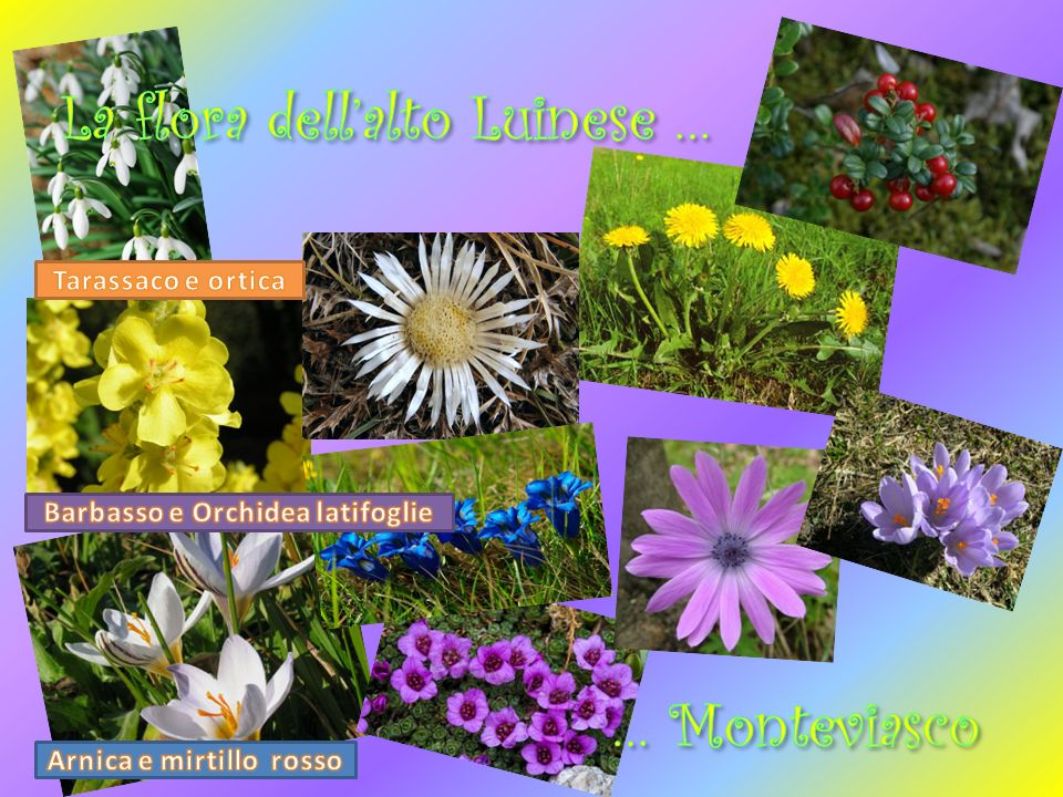 La flora dell'alto Luinese …