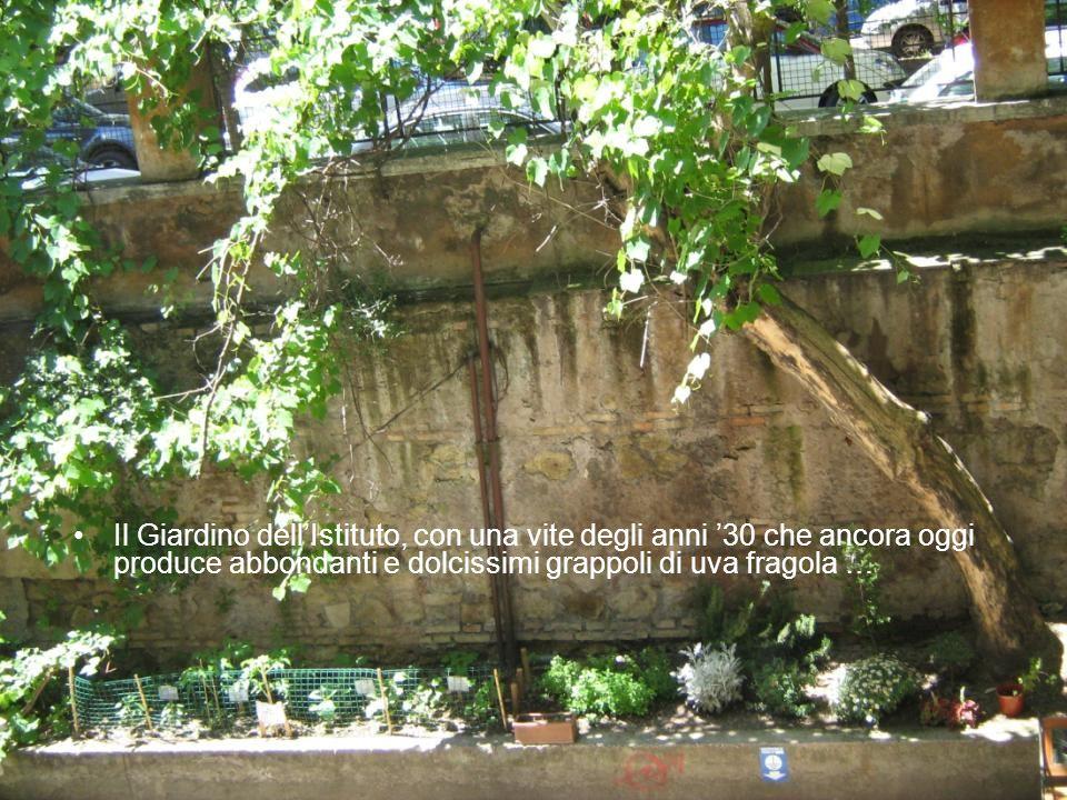Il Giardino dell'Istituto, con una vite degli anni '30 che ancora oggi produce abbondanti e dolcissimi grappoli di uva fragola …