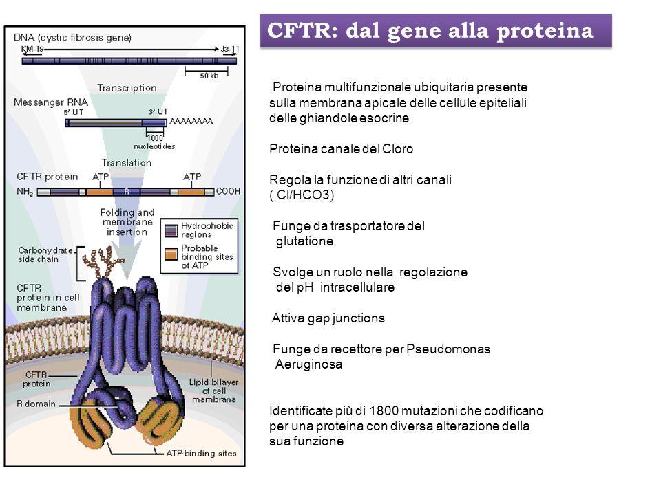 CFTR: dal gene alla proteina